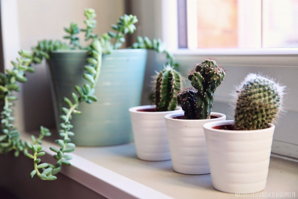 Cactus deco appartement petit scandinave plantes vertes 11 for Plantes vertes