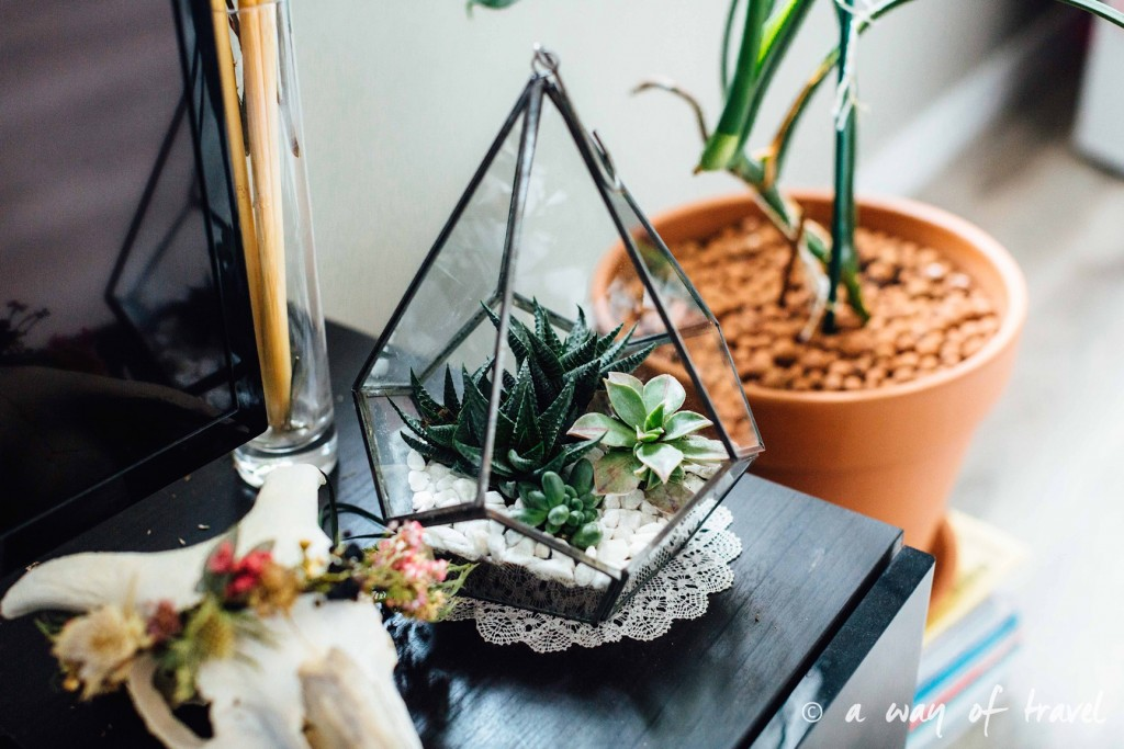 diy terrarium de succulentes a way of travel. Black Bedroom Furniture Sets. Home Design Ideas