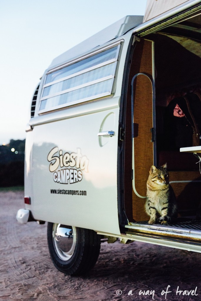 van-roadtrip-camping-camper-cat-chat-combi-38