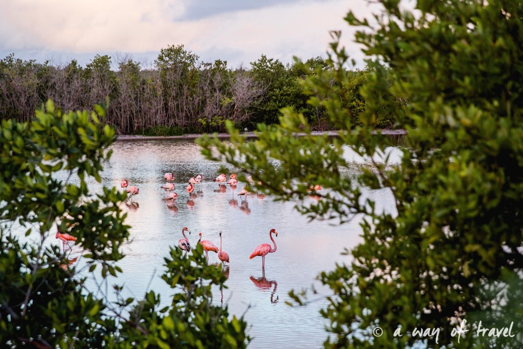 cayo coco beach plage flamants roses cuba flamingo 8