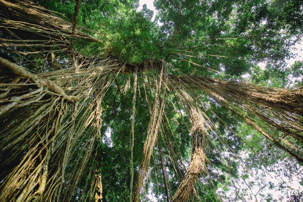 Ubud Bali foret singes monkey forest quoi faire idée touristique 10