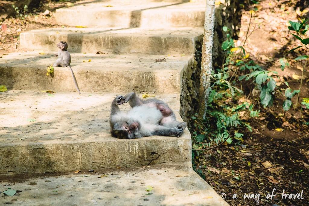 Ubud Bali foret singes monkey forest quoi faire idée touristique 11