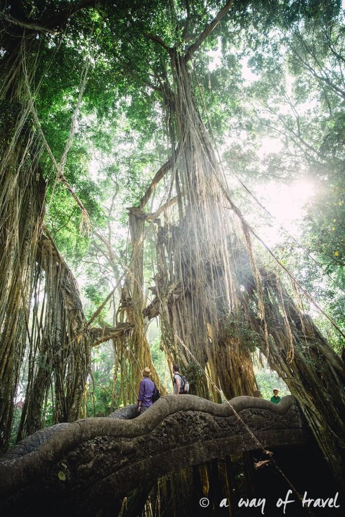 Ubud Bali foret singes monkey forest quoi faire idée touristique 14