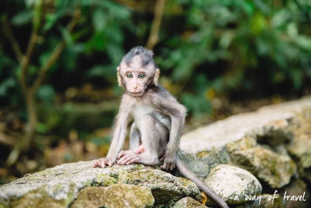 Ubud Bali foret singes monkey forest quoi faire idée touristique 5