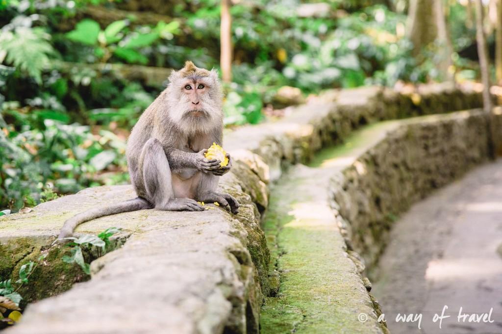 Ubud Bali foret singes monkey forest quoi faire idée touristique 6