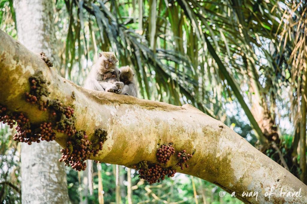 Ubud Bali foret singes monkey forest quoi faire idée touristique 7