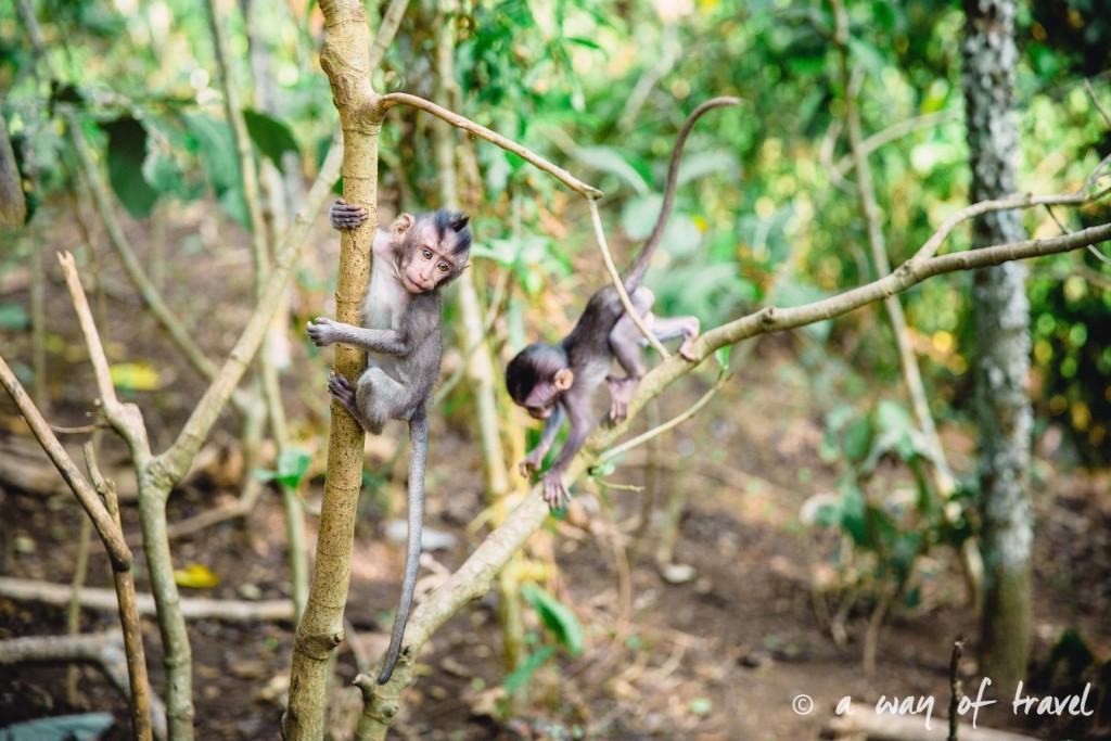 Ubud Bali foret singes monkey forest quoi faire idée touristique 8