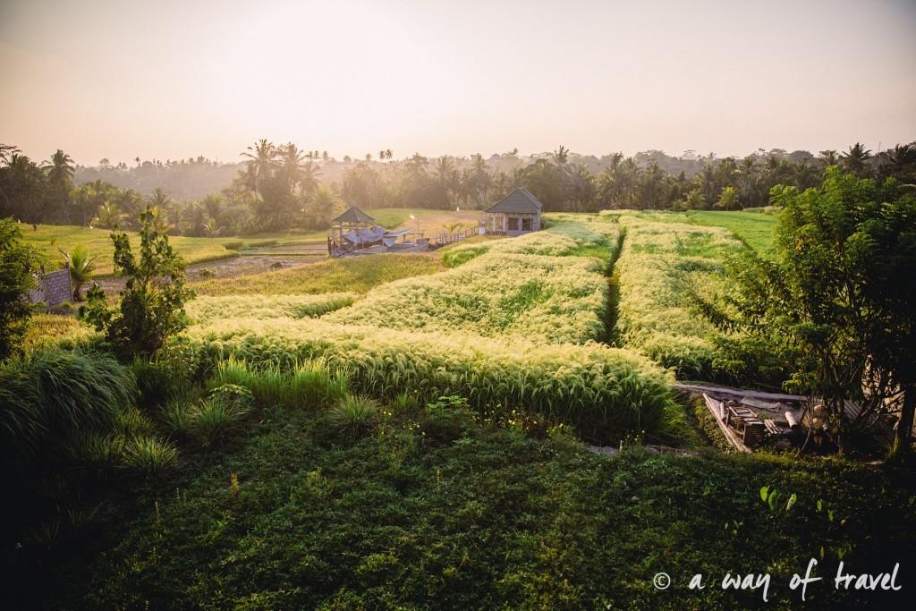 visit Ubud Indonesia Bali quoi faire rizière Jl. Subak Sok Wayah, Tjampuhan