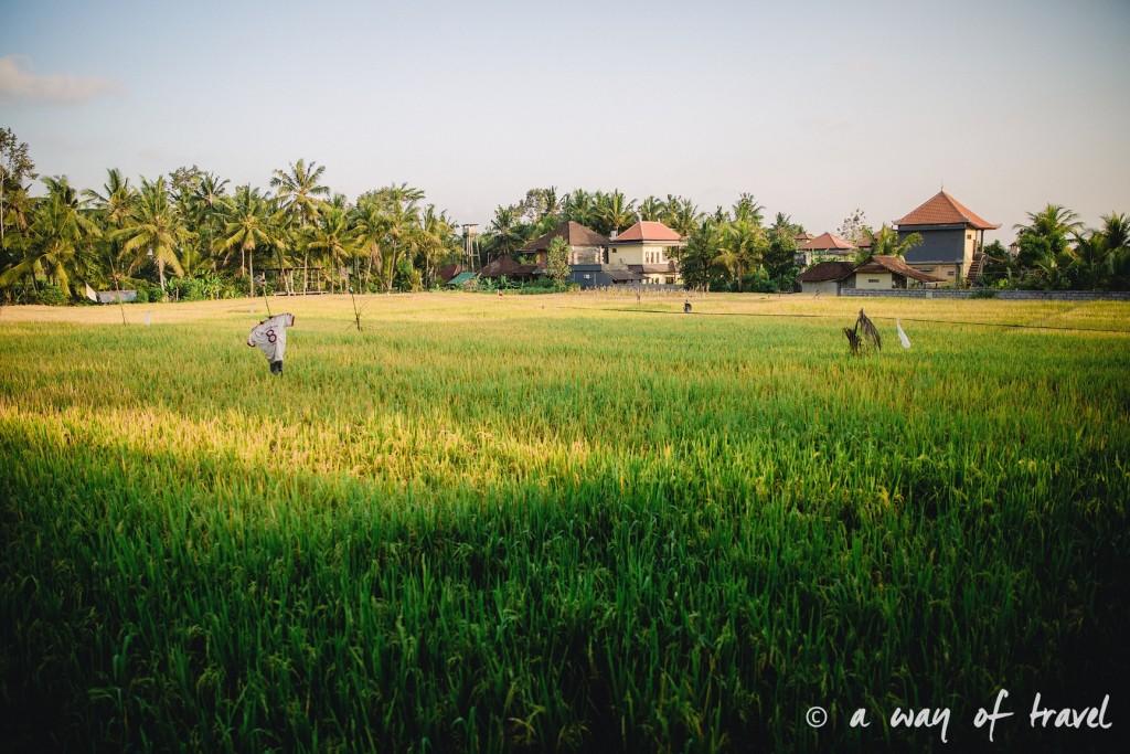 visit Ubud Indonesia Bali quoi faire rizière Tjampuhan idée touristique 6
