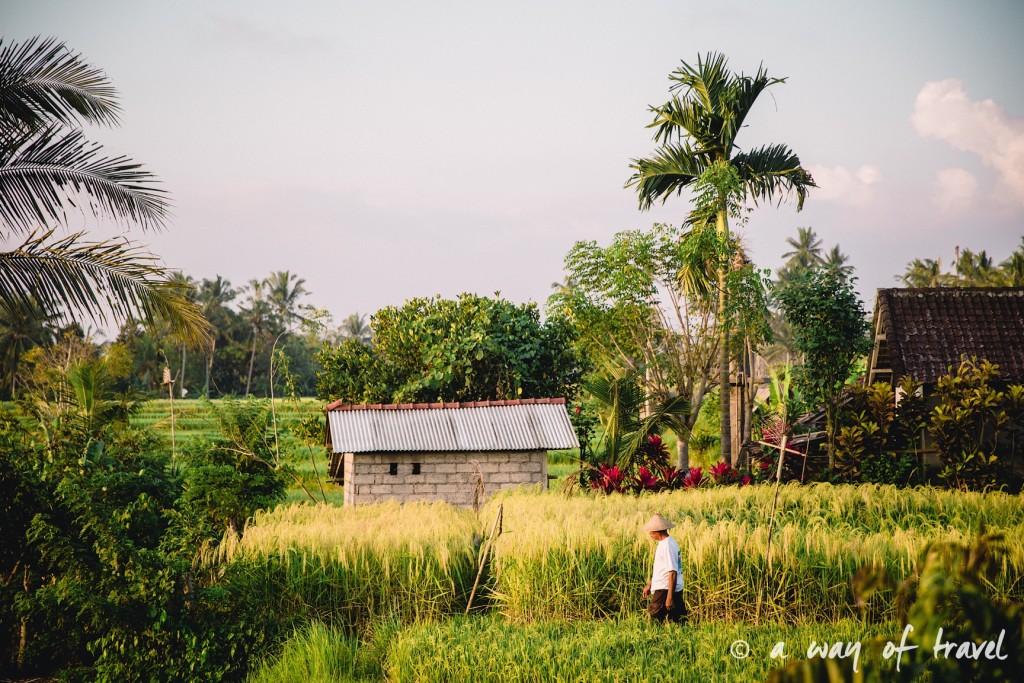 visit Ubud Indonesia Bali quoi faire rizière Tjampuhan paysan