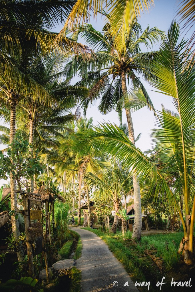 visit Ubud Indonesia Bali quoi faire rizière chemin Tjampuhan palmiers