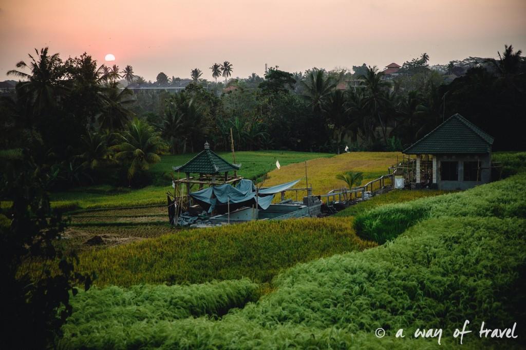 visit Ubud Indonesia Bali quoi faire rizière coucher soleil sunset