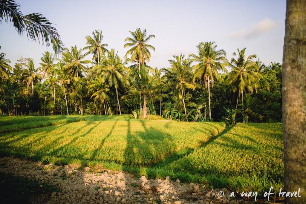 visit Ubud Indonesia Bali quoi faire rizière palmiers