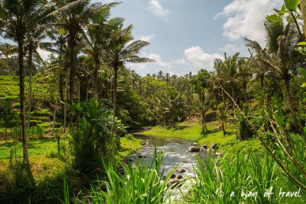 visit Ubud Indonesia Bali quoi faire rizière sana penestanan idée