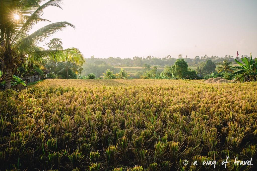 visit Ubud Indonesia Bali quoi faire rizière sana penestanan idée Jl. Subak Sok Wayah, Tjampuhan