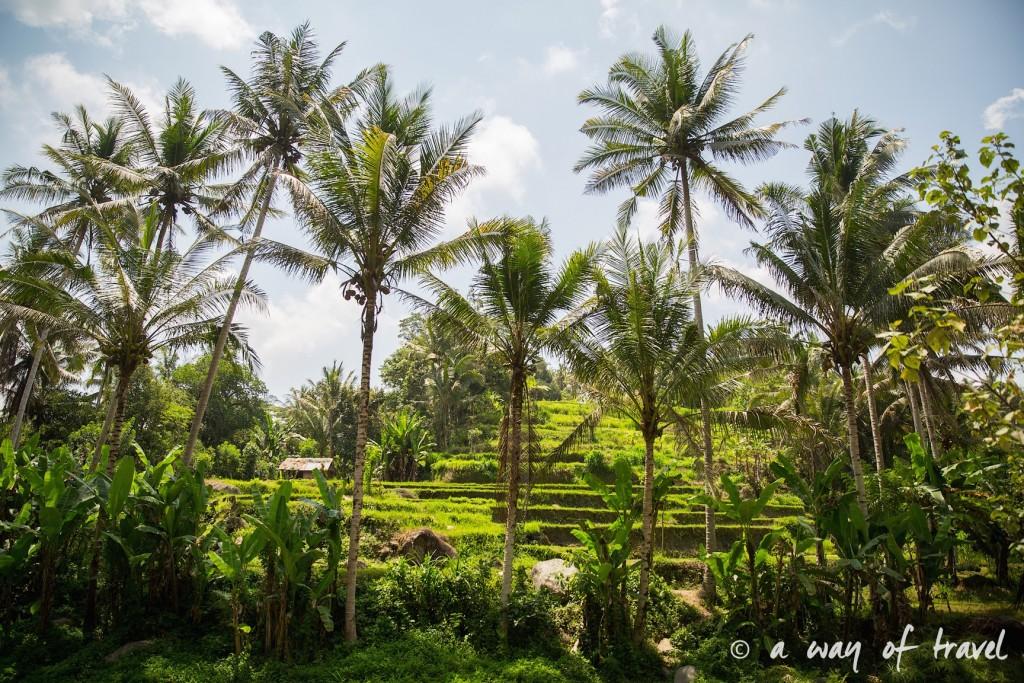 visit Ubud Indonesia Bali quoi faire rizière sana penestanan idée touristique 19