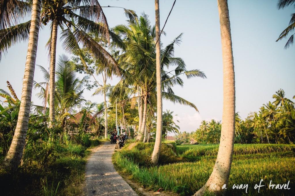 visit Ubud Indonesia Bali quoi faire rizière sana penestanan idée touristique 21