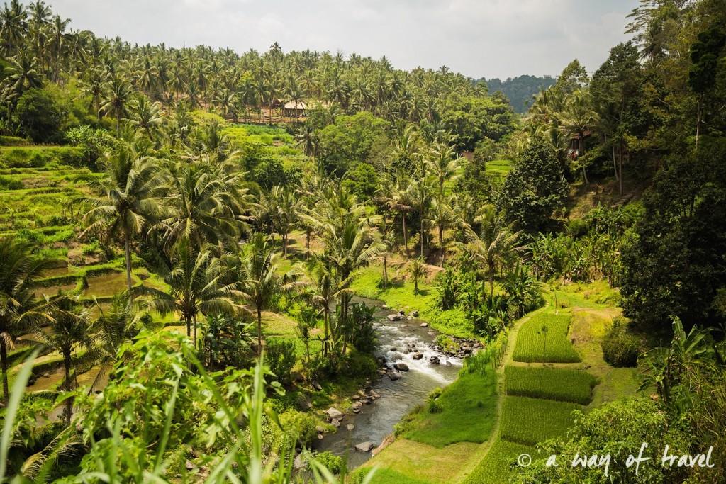 visit Ubud Indonesia Bali quoi faire rizière sana penestanan idée touristique 22