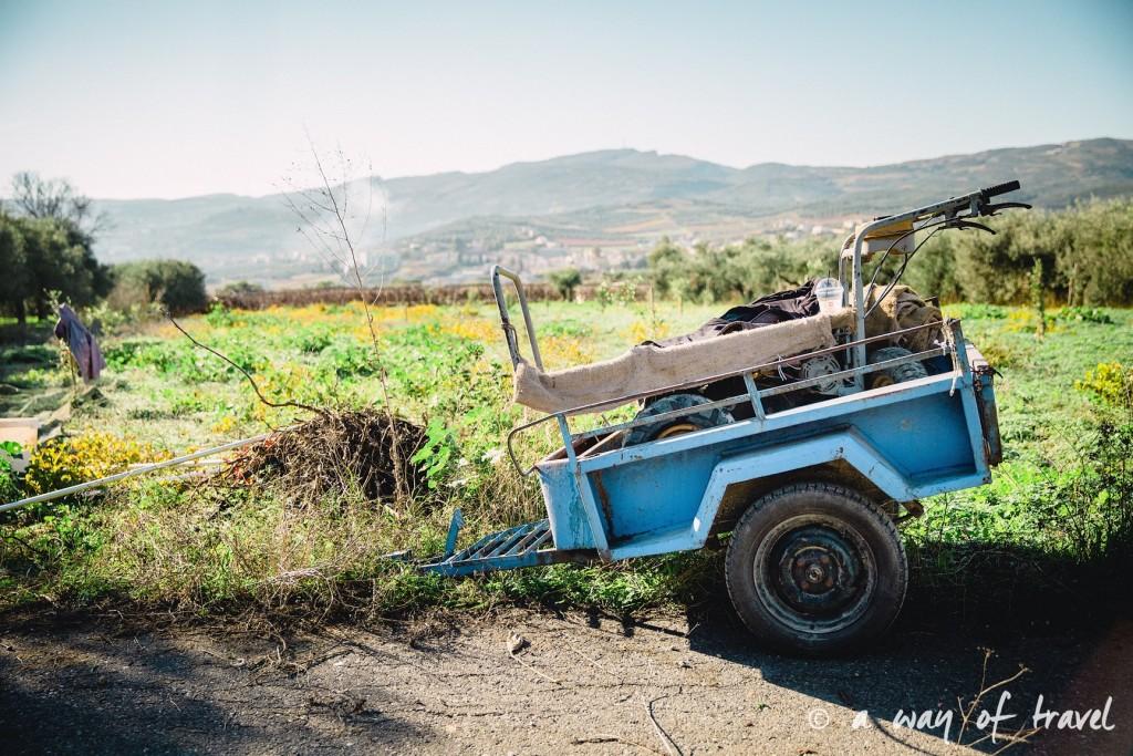 Crête champs d'oliviers