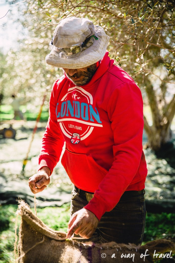 Crête fermier olive fields champs olivier grece