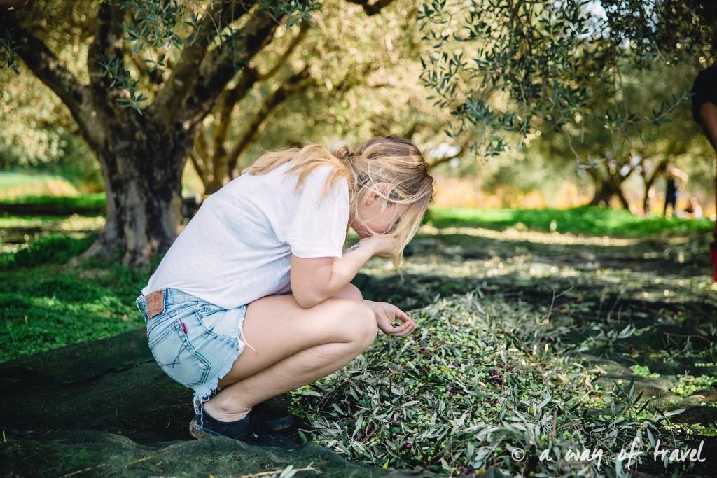 Crête odeur olives