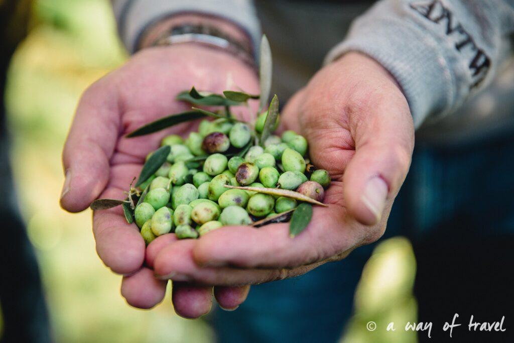 Crête olive huile champs olivier