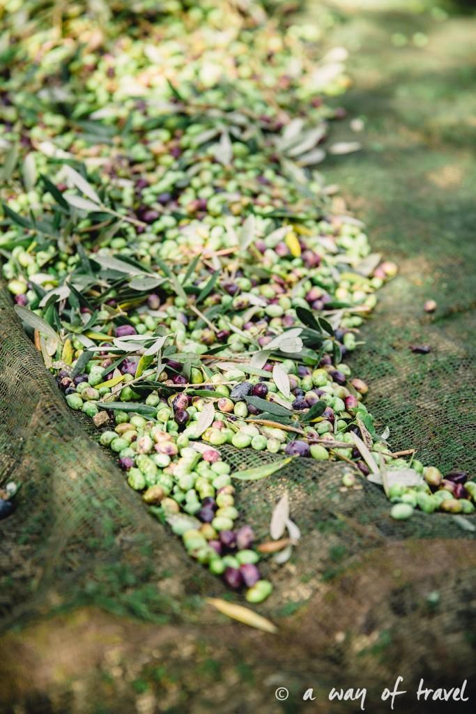 Crête olives par terre champs fields