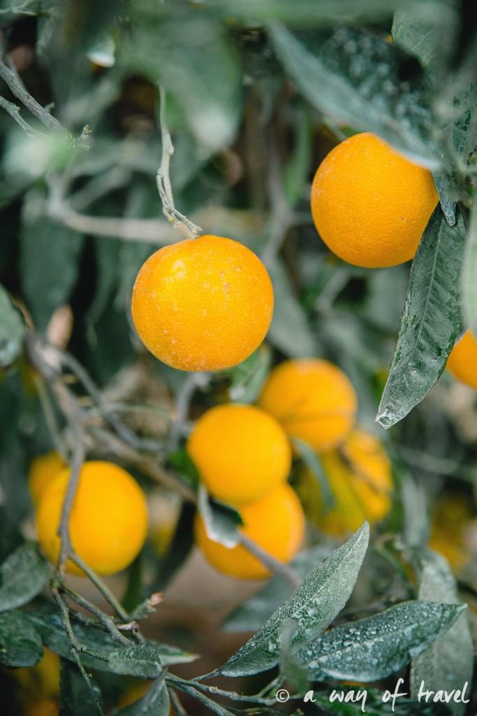 Crête oranges