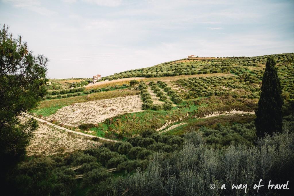 Crête paysage olivier ile grece visit