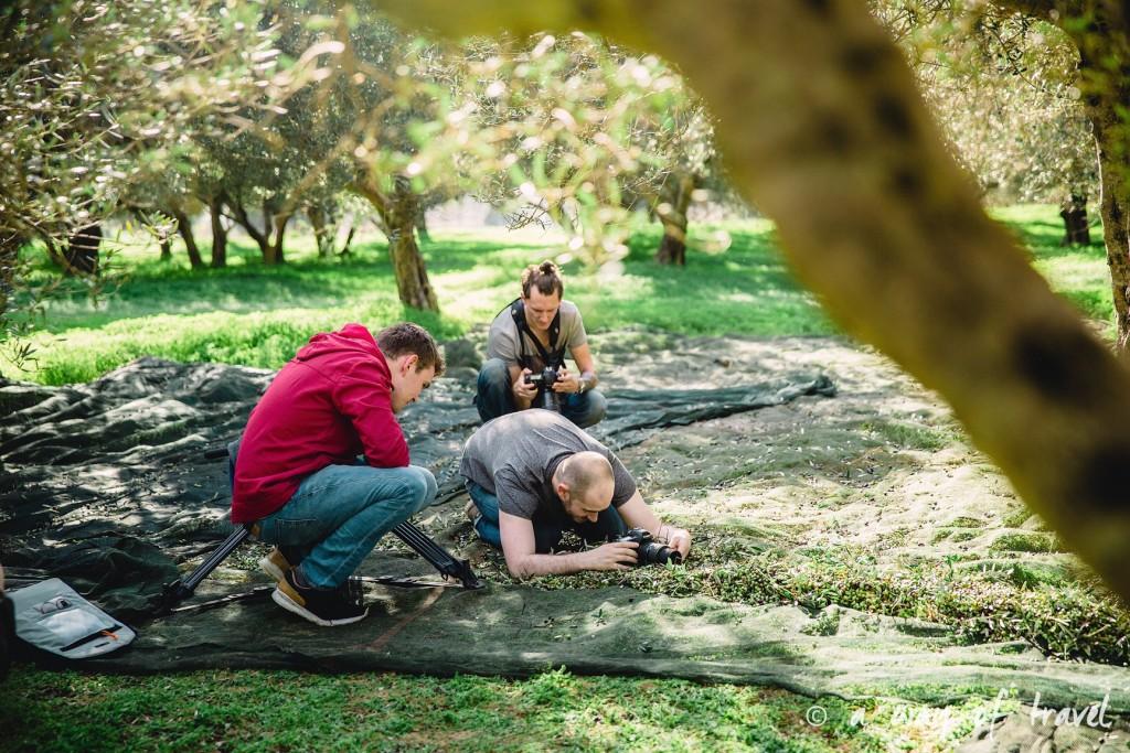 Crête photographes champs olivier grece reportage