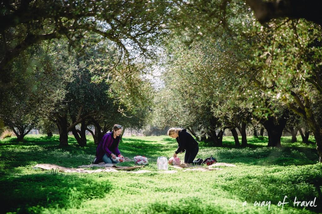 Crête pique nique champs d'oliviers