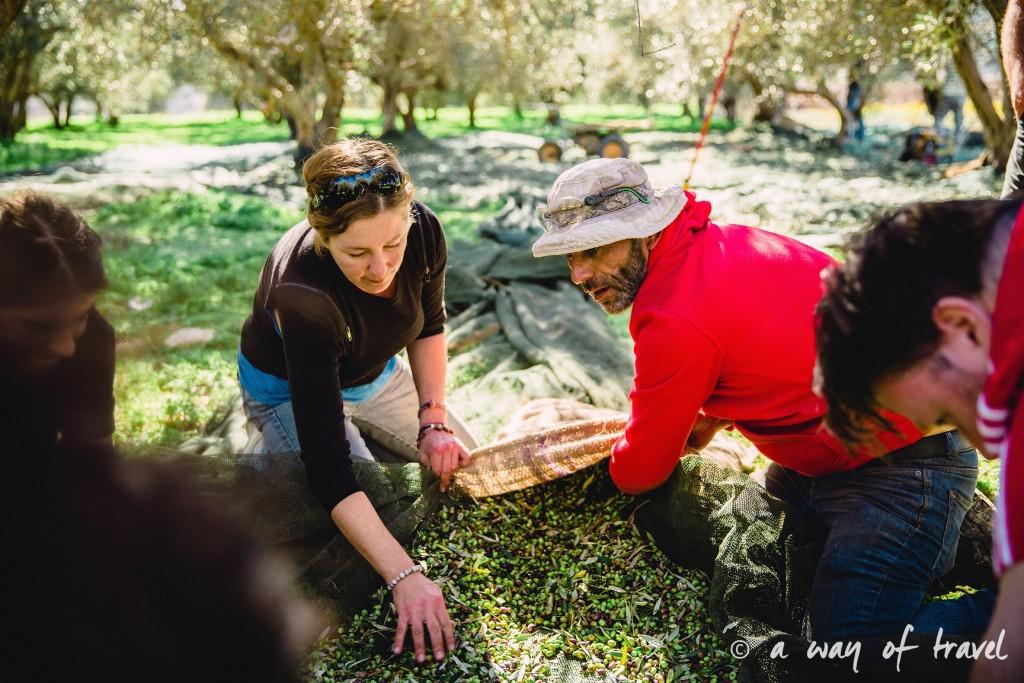 Crête ramasser olives