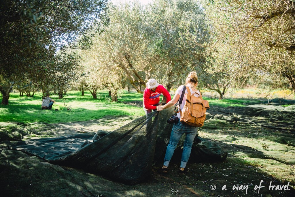Crête ramasser olives pour huile grece