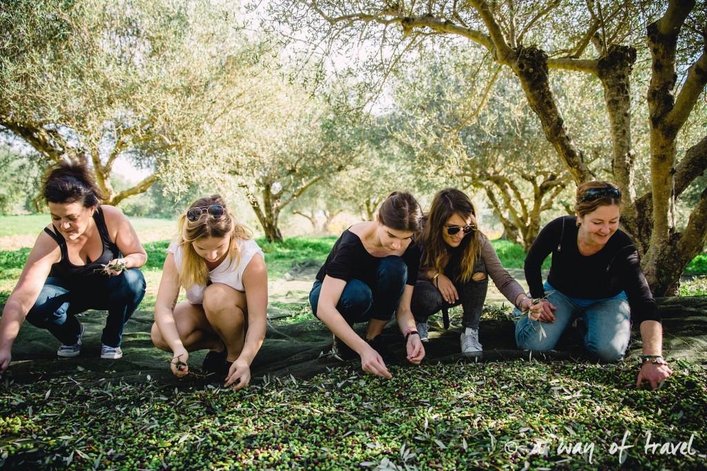 Crête trier olives pour huile