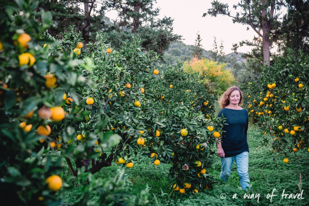 Fodele  Crete champ orange agrotourisme visit-155
