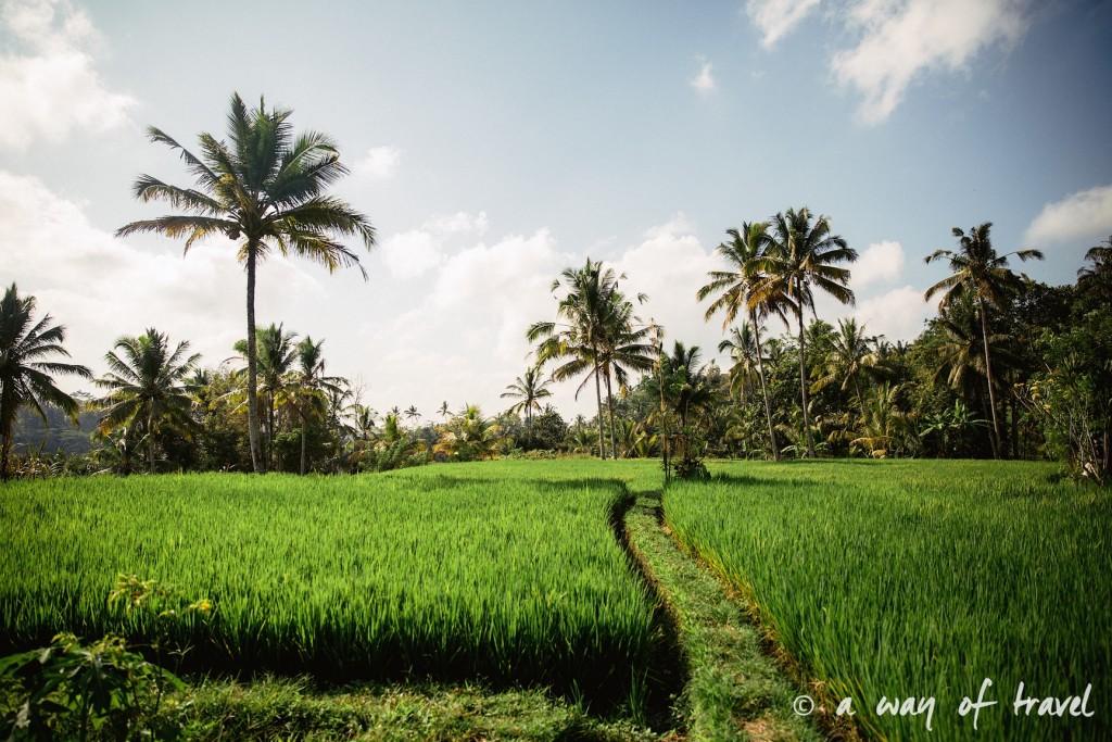 Indonesia Bali quoi faire visit Ubud 21
