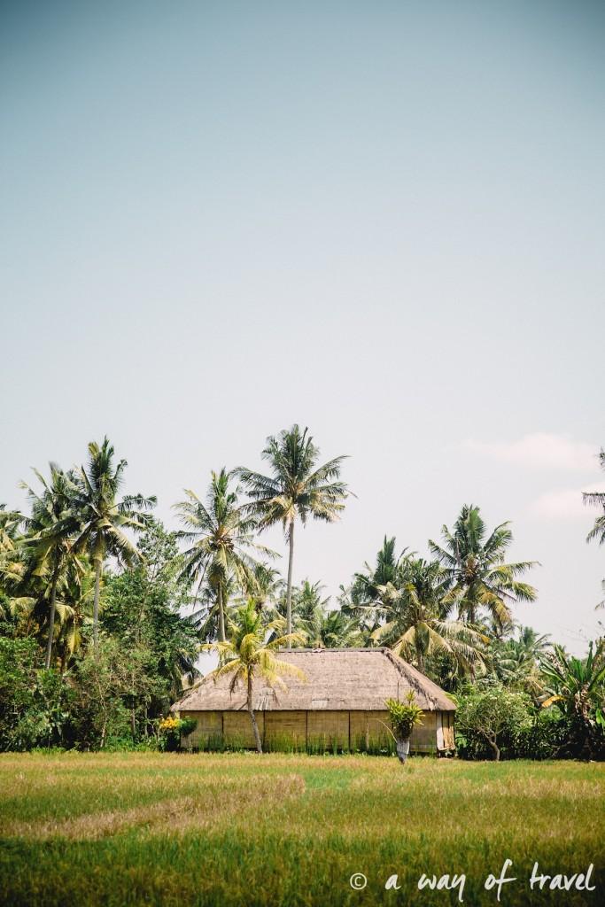 Indonesia Bali quoi faire visit Ubud riziere