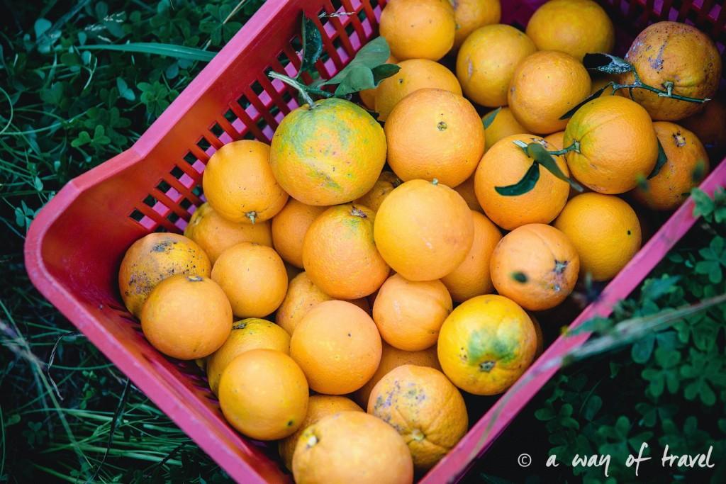 Oranges Crete-158