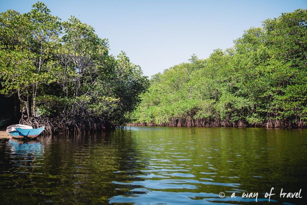 Visit Bali Indonesie Nasi Lembongan mangrove tour