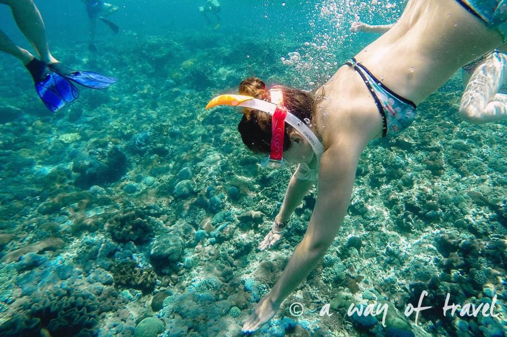 Visit Bali Indonesie Nasi Lembongan snorkeling plongee