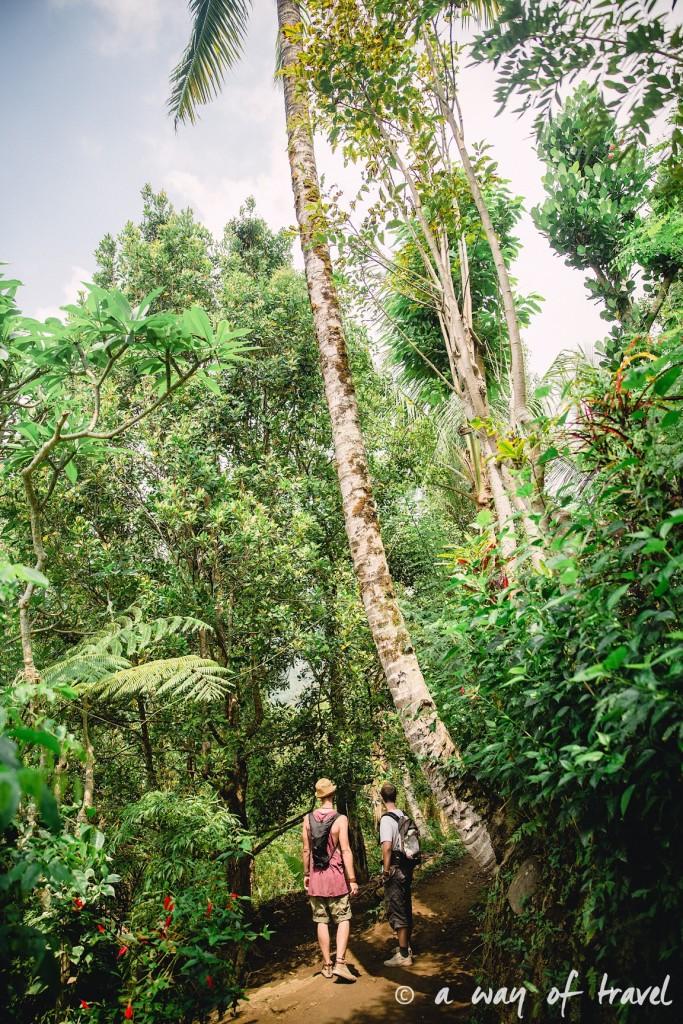 bali indonesie visiter munduk chute waterfall 16