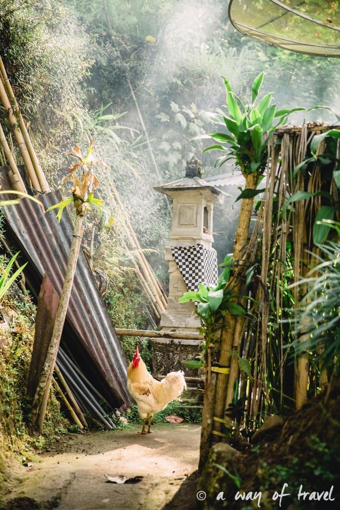bali indonesie visiter munduk chute waterfall 21
