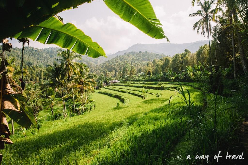 bali indonesie visiter munduk chute waterfall 22