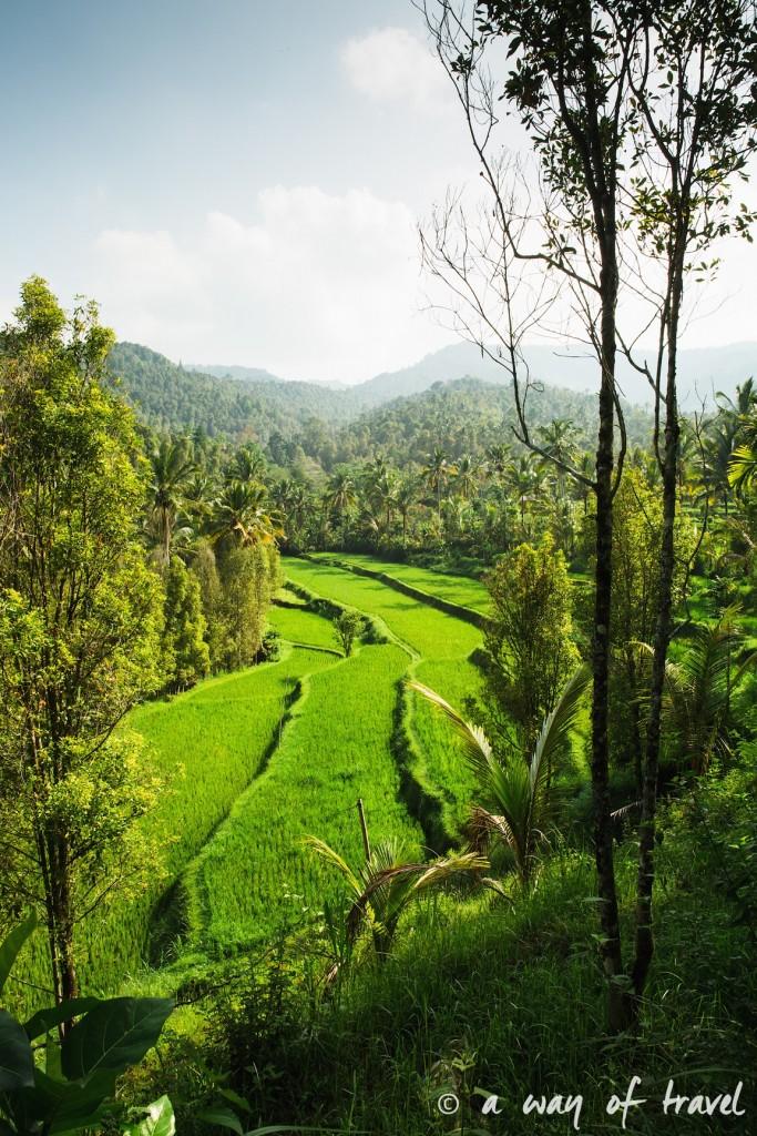 bali indonesie visiter munduk chute waterfall 23