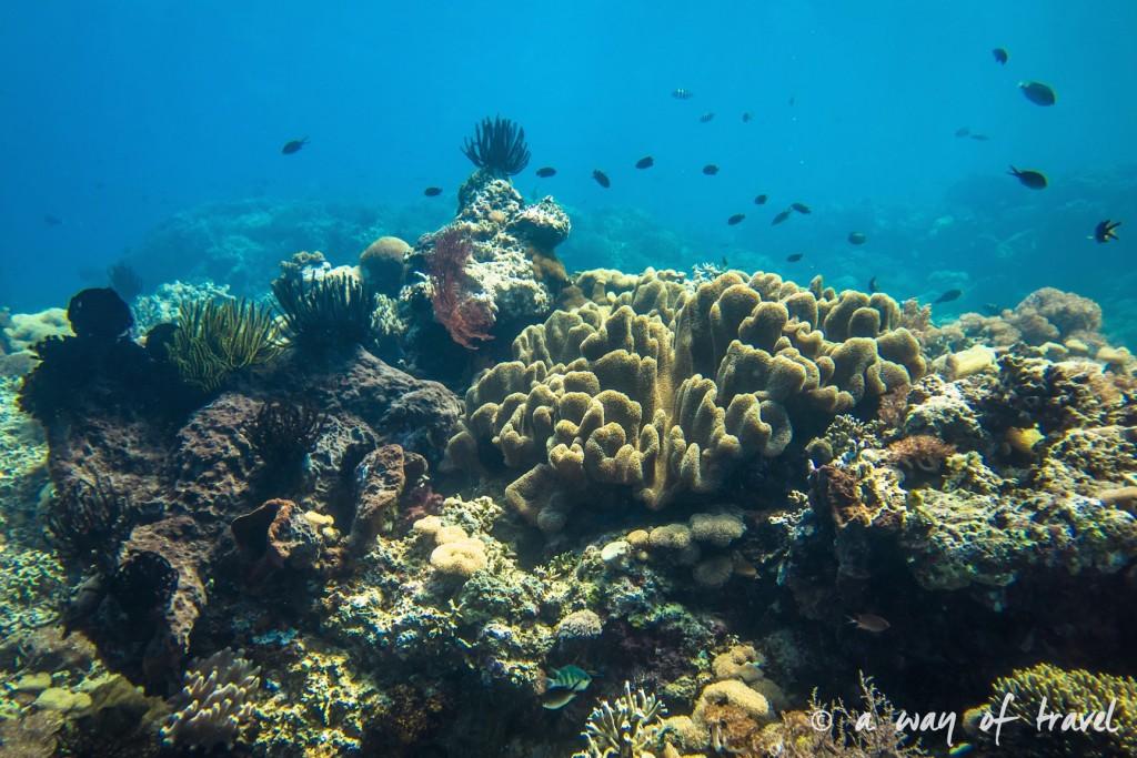 fond marin photos aquatique lovina permuteran bali visit 16