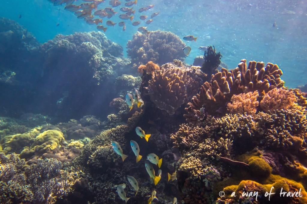 fonds marins lovina permuteran bali visit 17