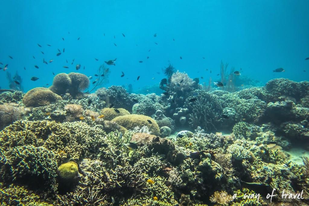 lovina permuteran bali visit photo sous marine