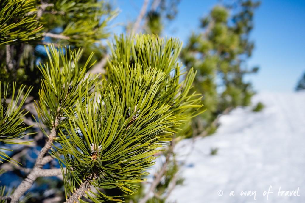 Plateau de beille Pyrénées randonnee raquette ski de fond hiver blog voyage 28