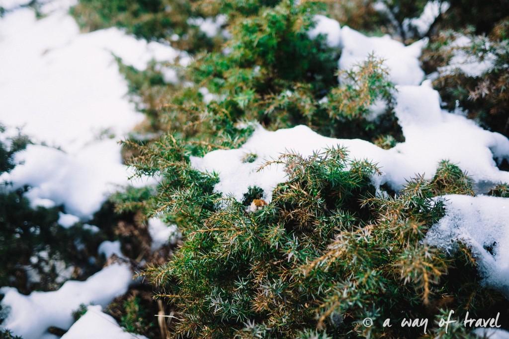 Randonnée neige raquette cirque garantie pyrenees montagne 11