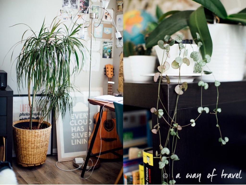 Plantes d'intérieur déco vert signification 1